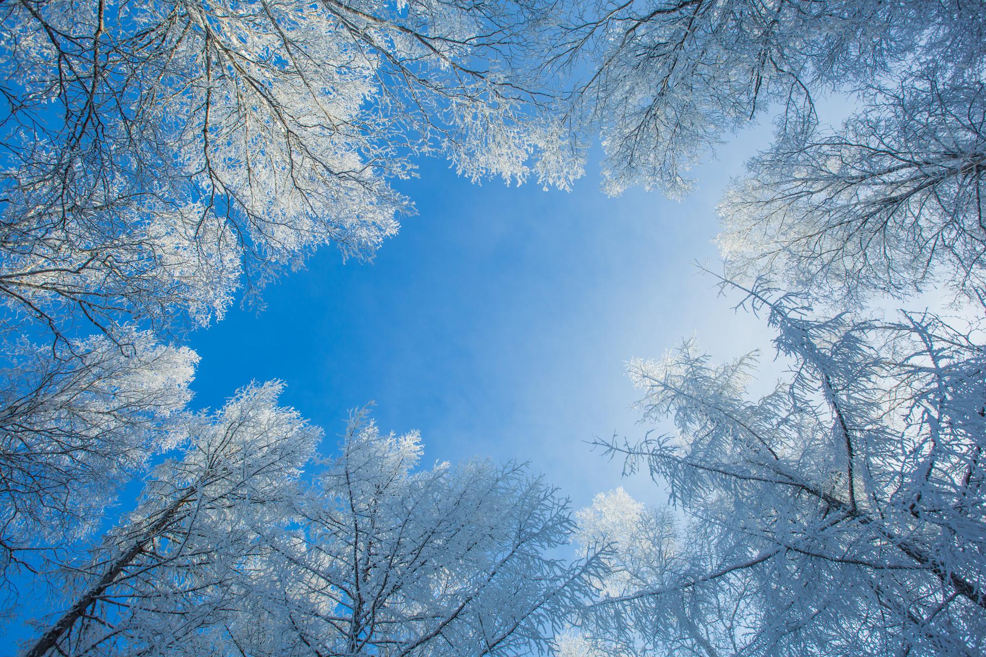 摄图网_500598195_banner_阿尔山的雾凇和蓝天(企业商用).jpg